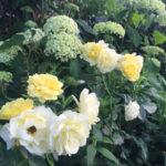tuinarchitecten maastricht